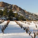 Verkostungsnotizen – Besuch bei Ficaria Vins im November 2014